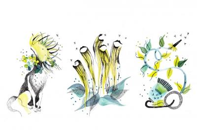 Les-plantes-carnivores-Pièges-actifs-Pièges-passifs-Pièges-à-aspirations